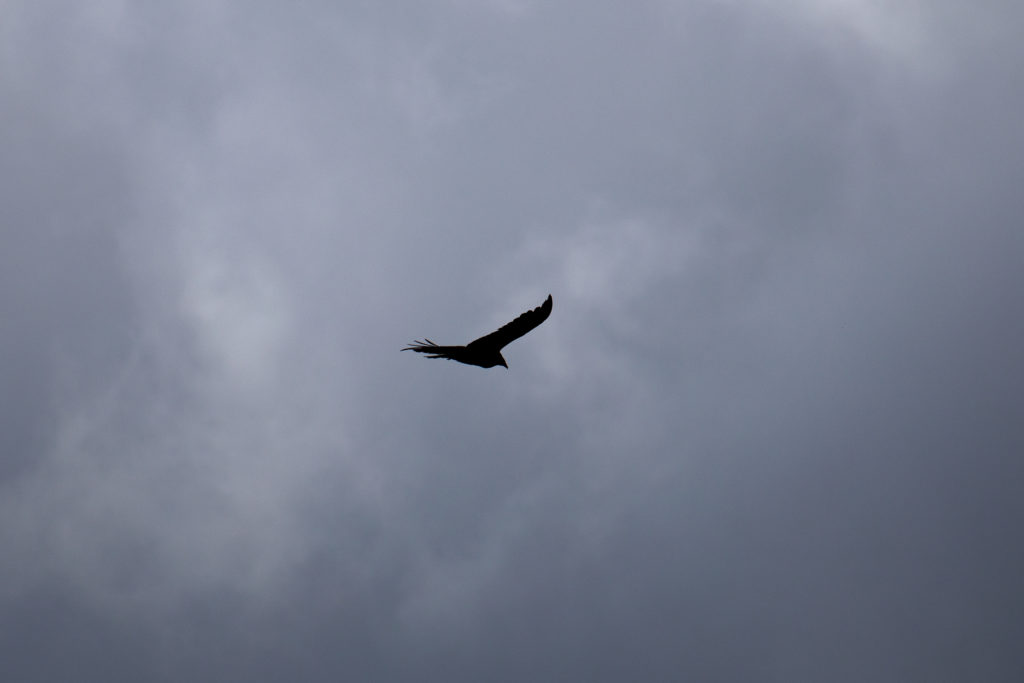 Lone Bird in Foreboding Sky