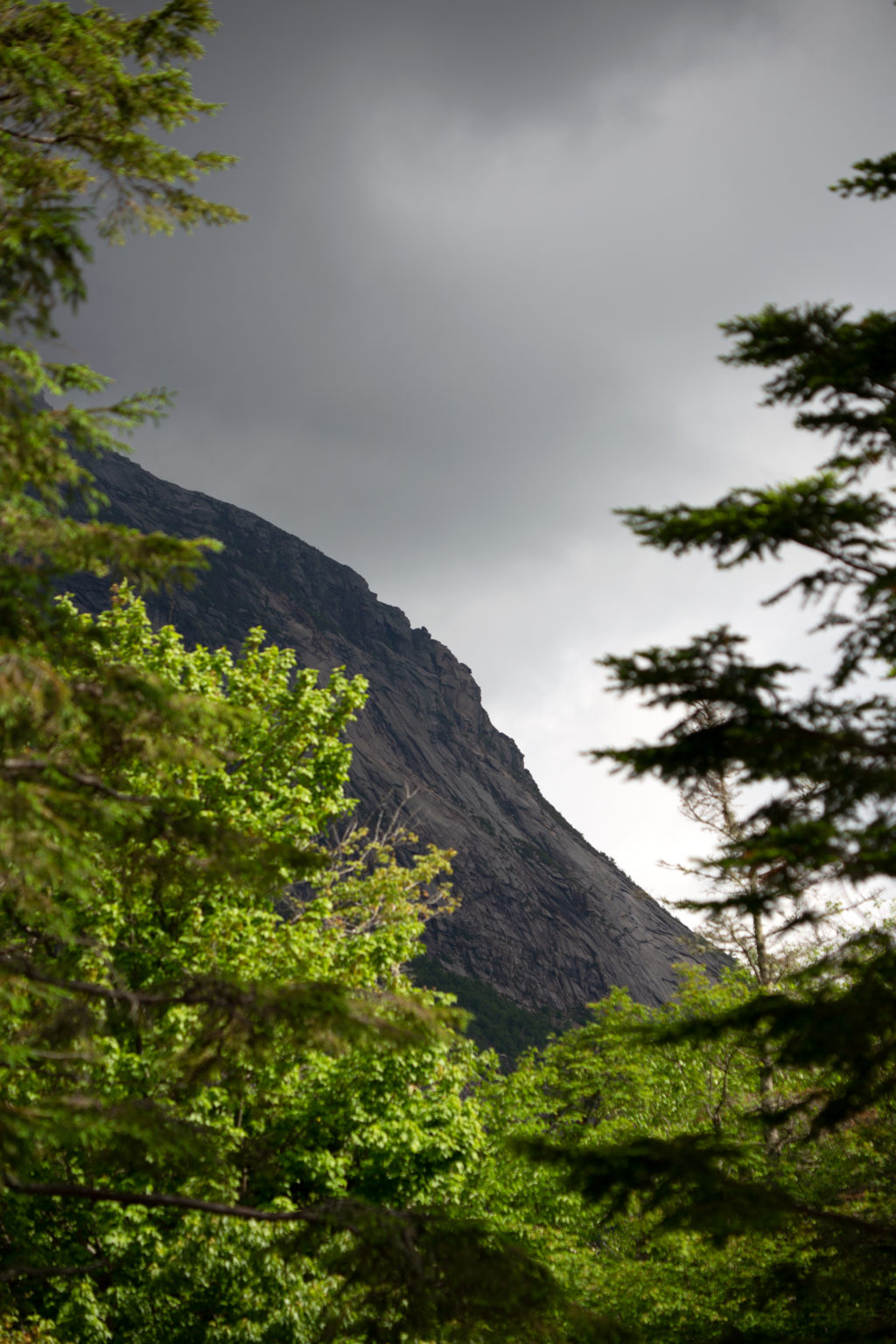 View of Rockslides Through the Trees