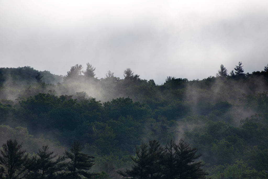 Layers of Mist Over the Forest
