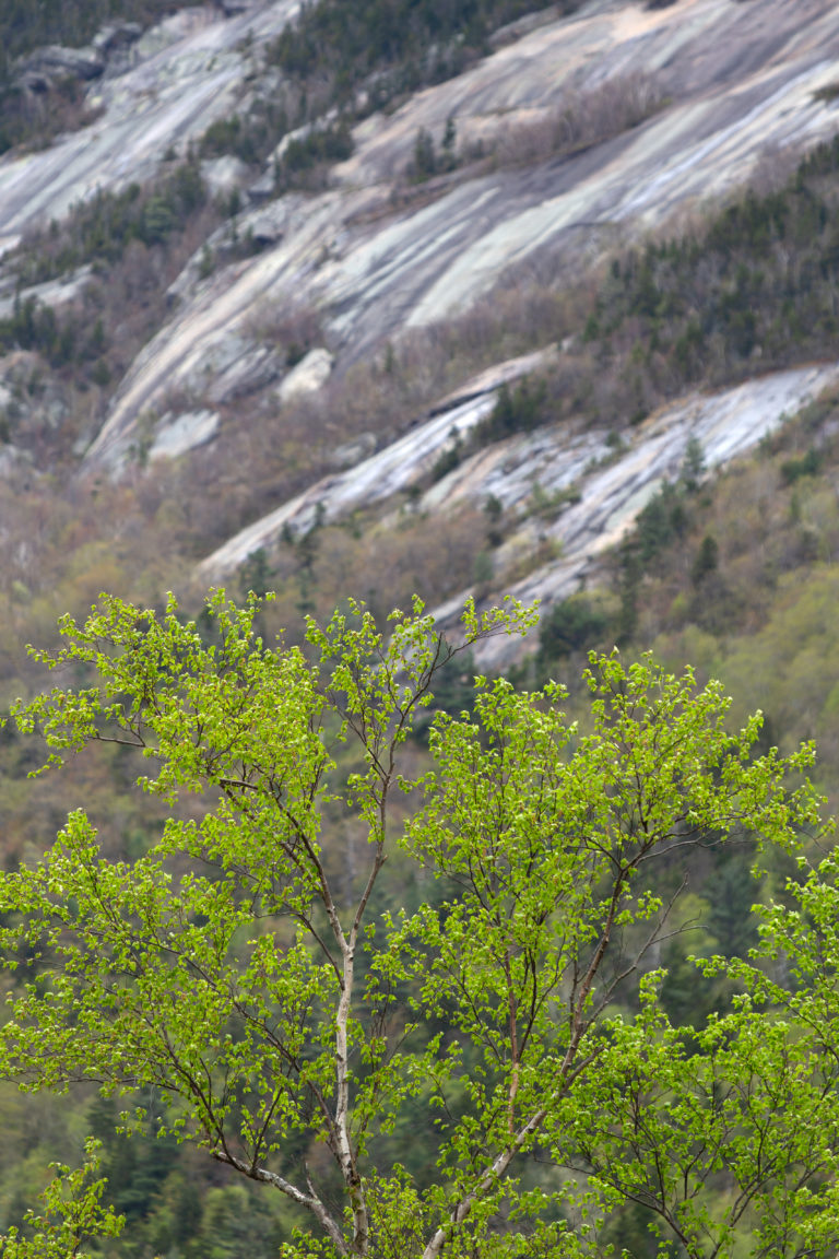 Spring Tree Against Rocky Slope