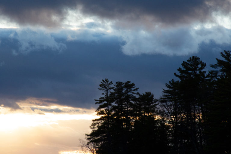 Pine Trees at Sunset
