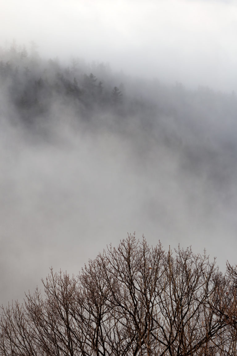 Fog Rolling Through Bare Forest