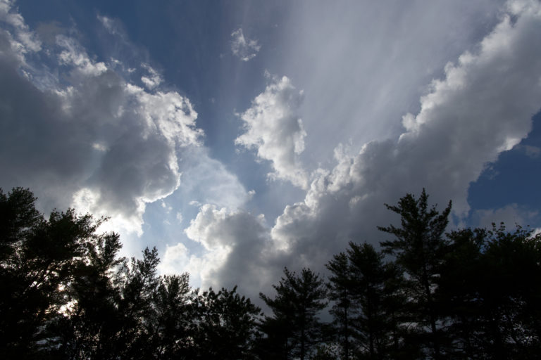 Silhouetted Trees Against Large Puffy Clouds