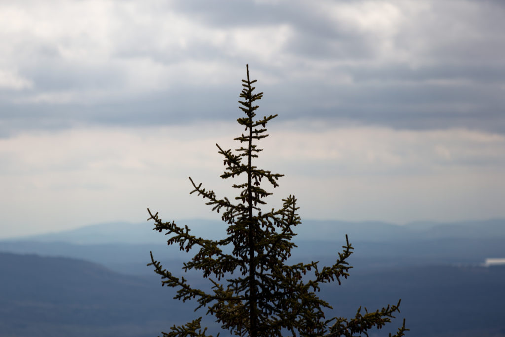 Treetop on a Mountaintop