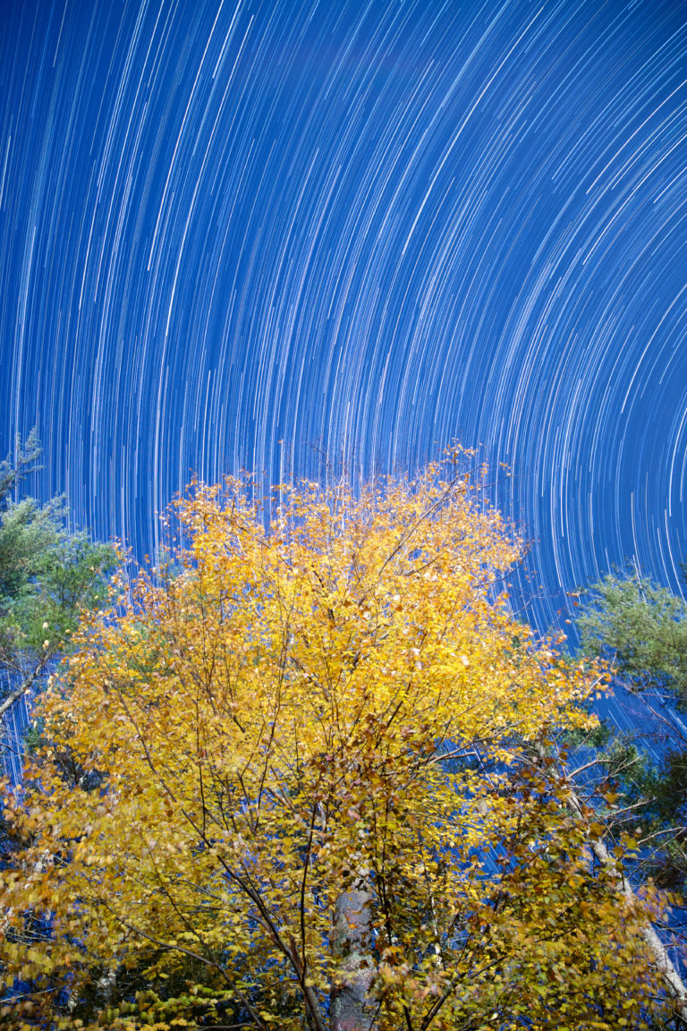 Star Trails Over Golden Tree