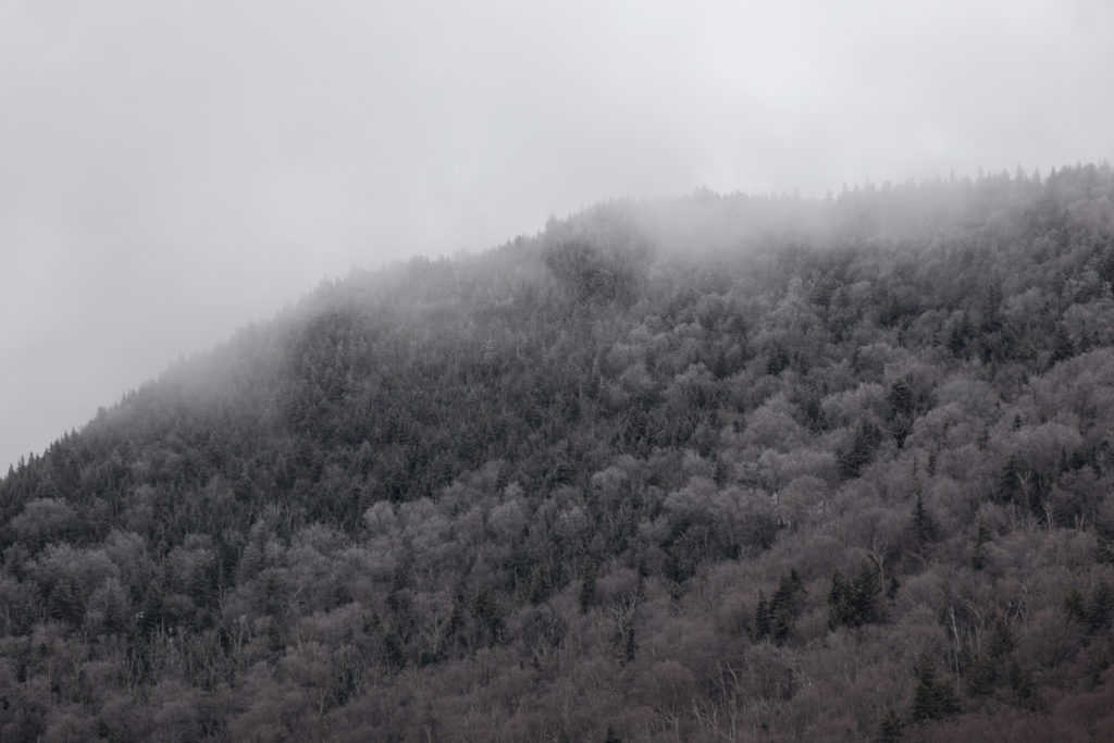 Frosted Hill in Fog