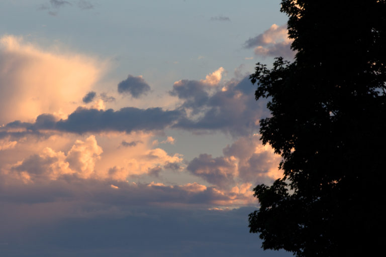 Tree Silhouette Against Late Day Summer Sky