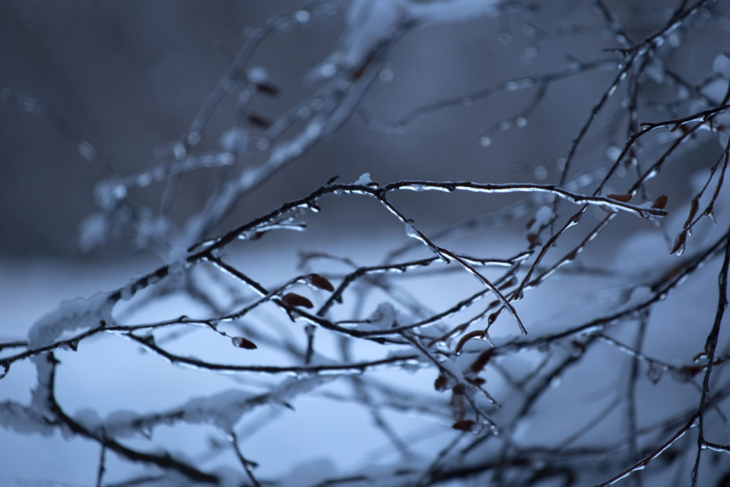 Ice Coated Delicate Branches