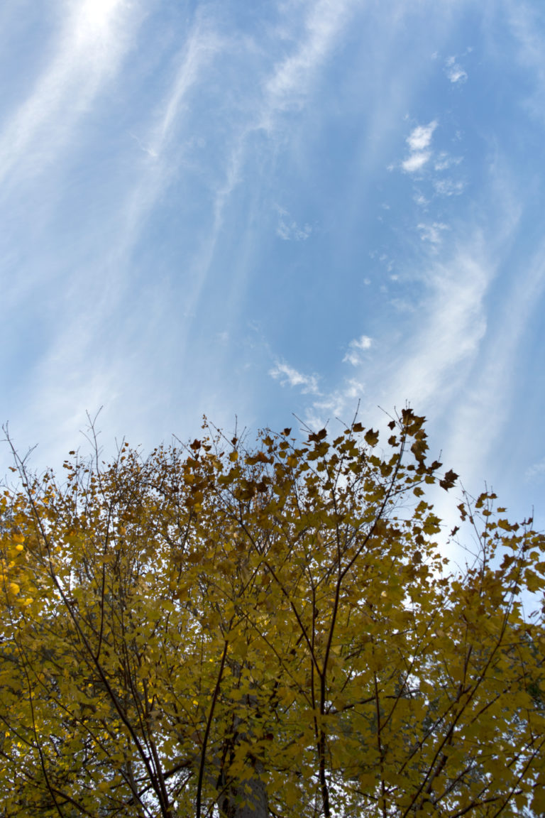 Looking Up to an Autumn Sky