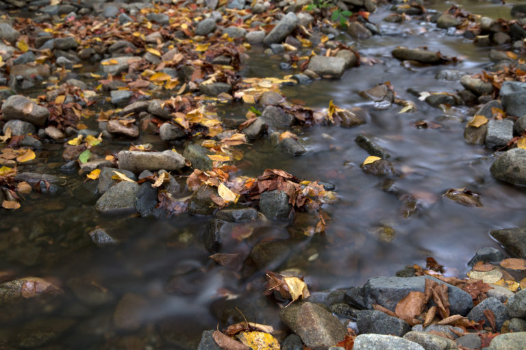 Shallow Fall Stream