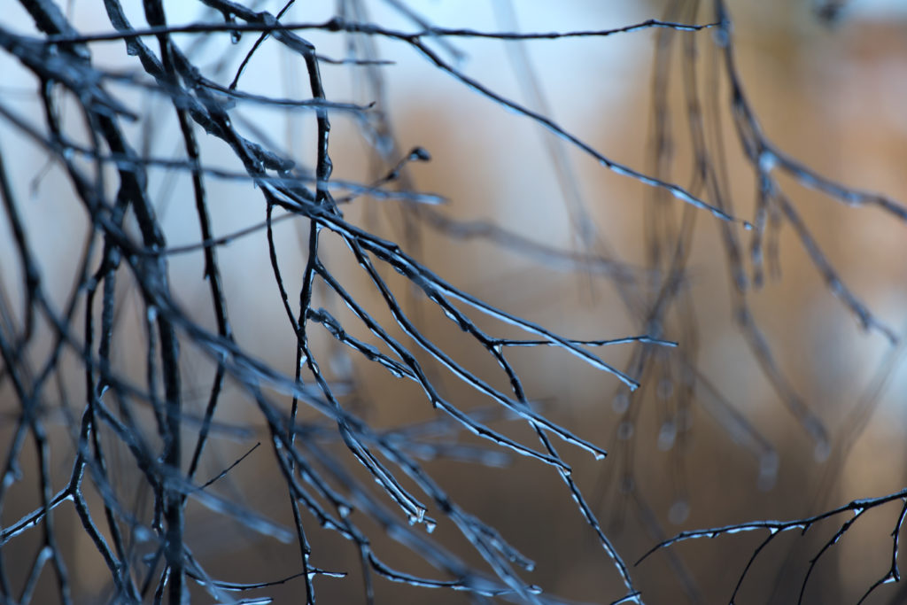Cold Branches