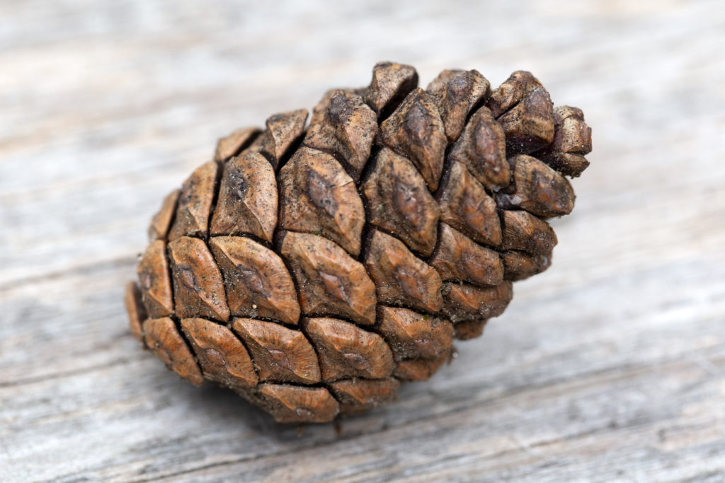 The Perfect Pinecone