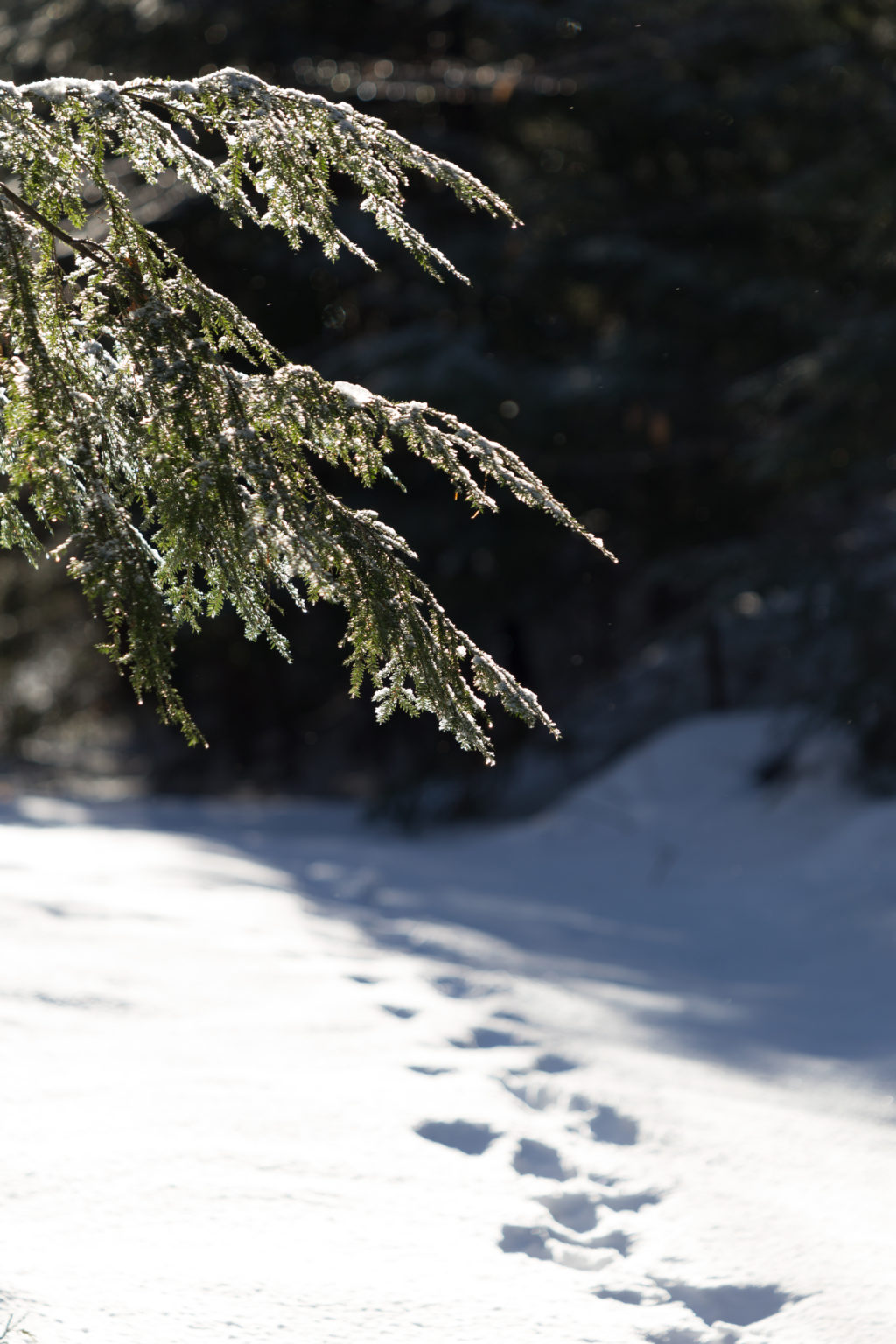 Breaking Trail in the Snow