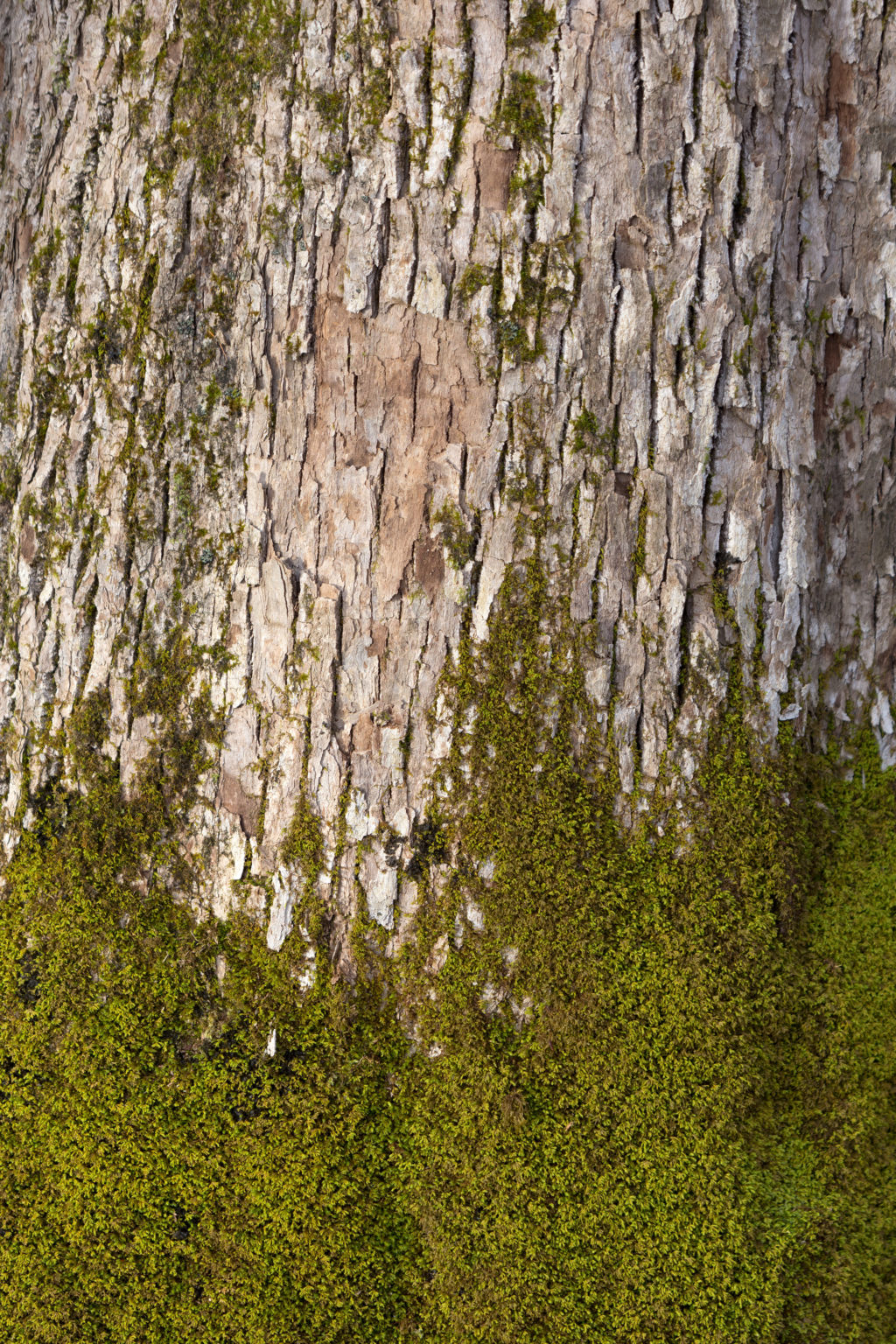 Moss Covered Bark