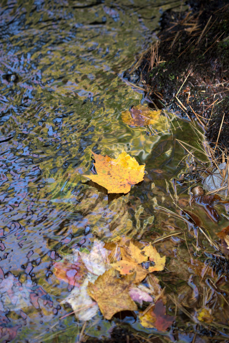 Fall Leaf Floating Downstream