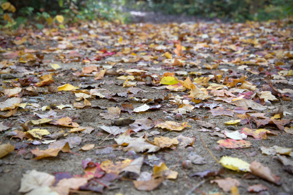 Fallen Leaves Covering Dirt Path