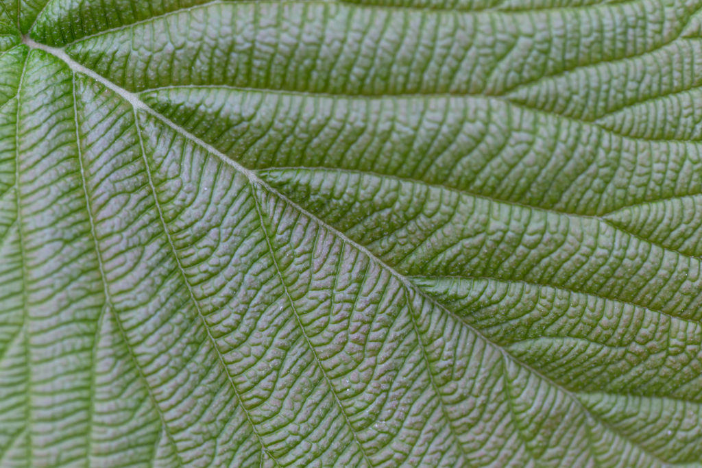 Muted Green Leaf