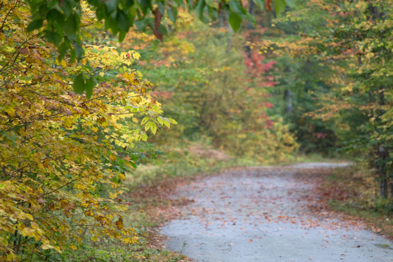 Old Carriage Road in Fall