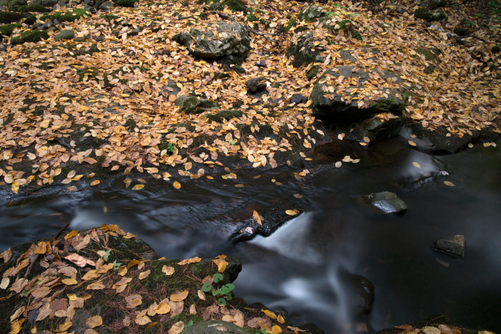 Stream Flowing Through Leaf-Covered Ground