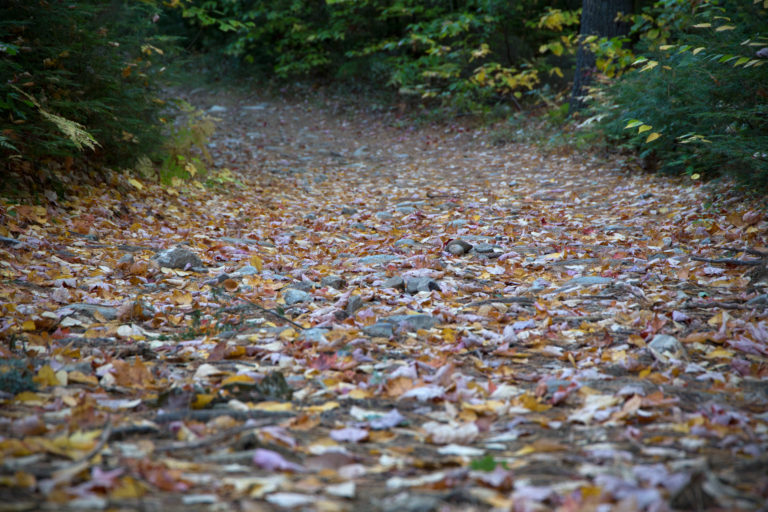 Dreary Autumn Path