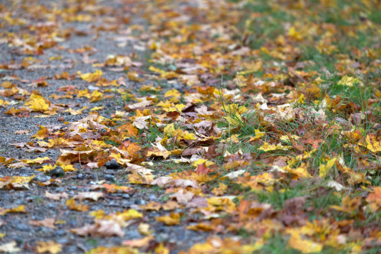 Fallen Leaves on Path