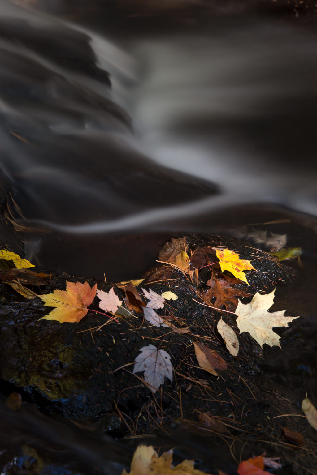 Dark Misty Stream and Glowing Leaves