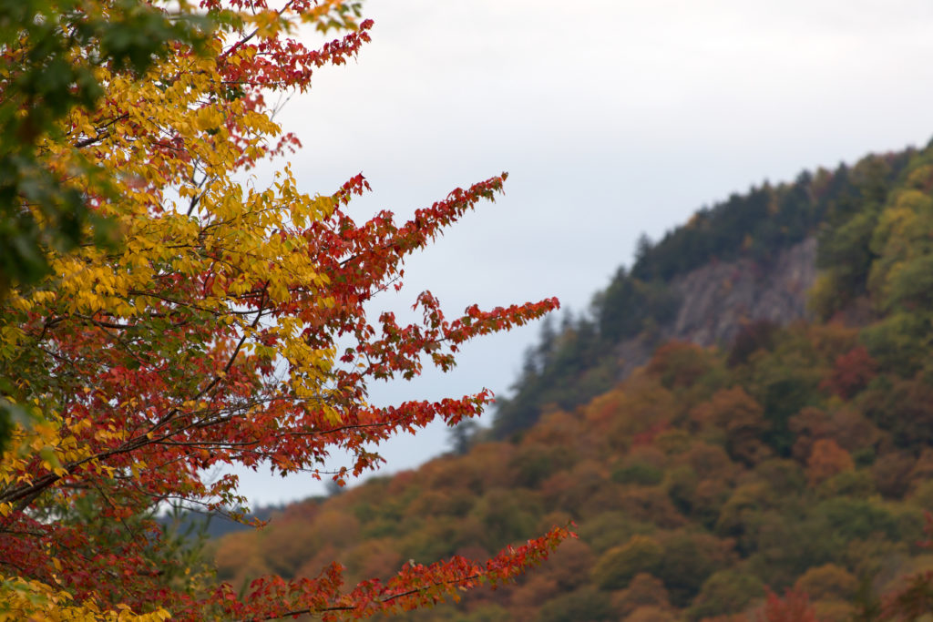 Yellow and Red Foliage in Front of Mountain
