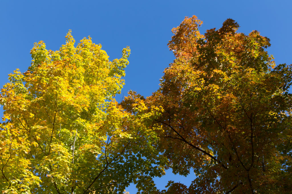 Changing Foliage Against a Bright Blue Sky