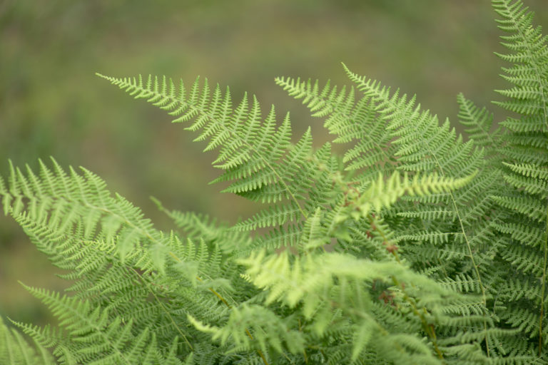 Ferns on a Humid Day