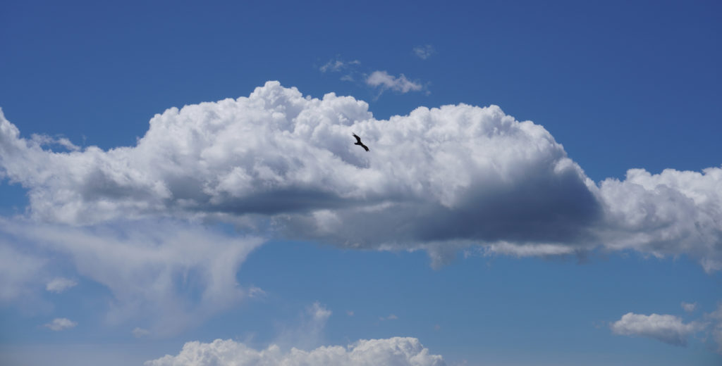 Bird Flying in the Clouds