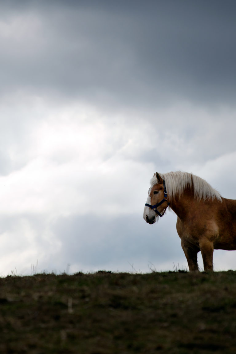 Majestic Horse in Field