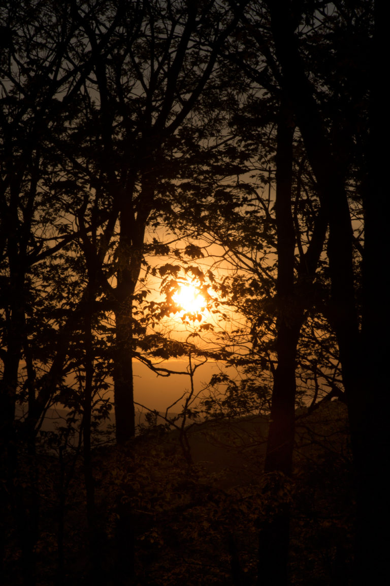 Spooky Sunset Through the Trees