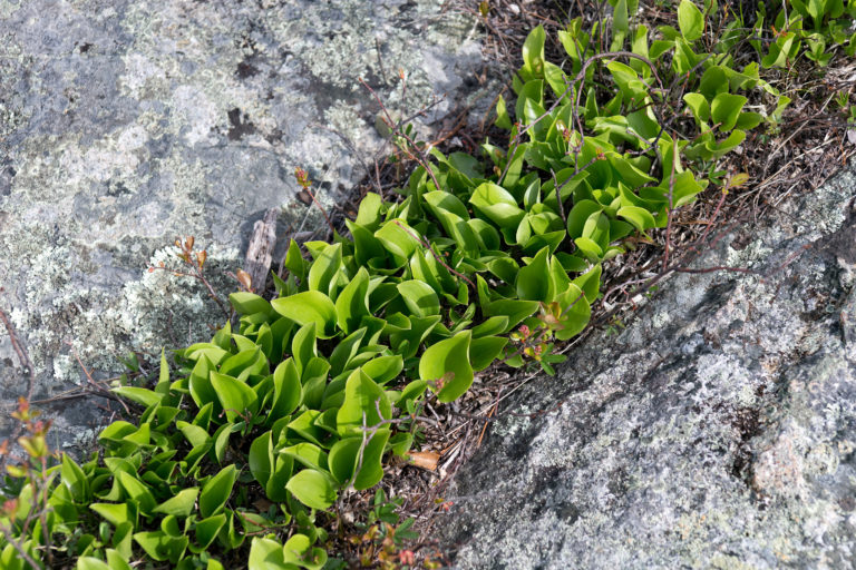 Plants Growing in Rock Crevice