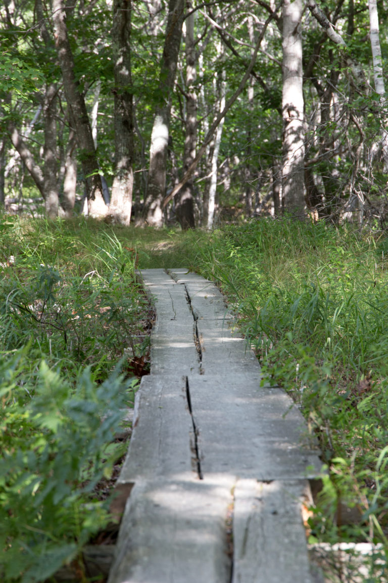Boardwalk Path