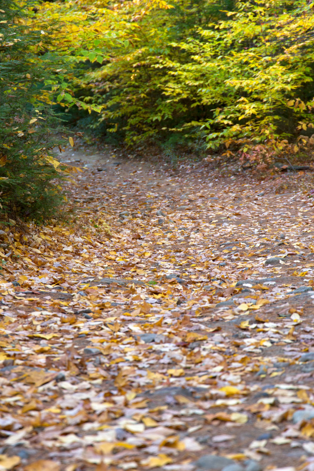 Leaf-Covered Path
