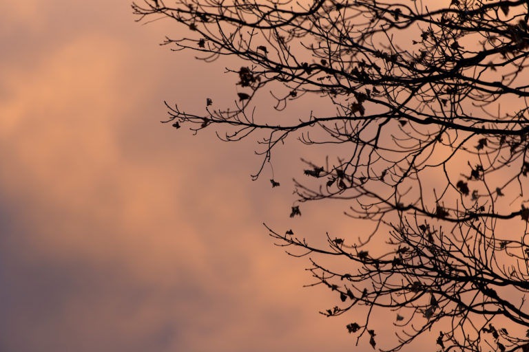 Tree Branch Silhouette Against a Grey Orange Sky