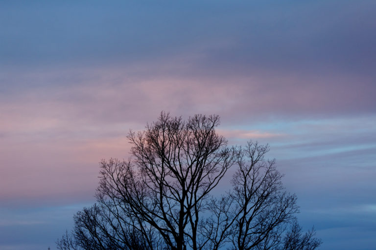 Tree Top at Dusk