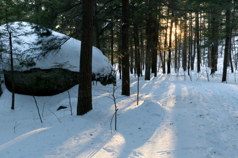 Long Cast Shadows in the Forest