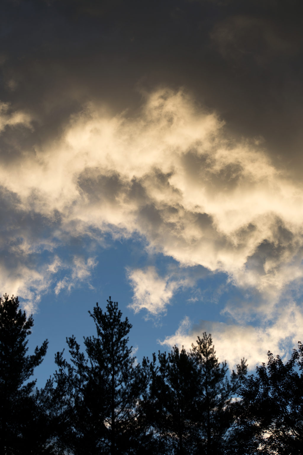 Soft Clouds Over Tree Silhouettes