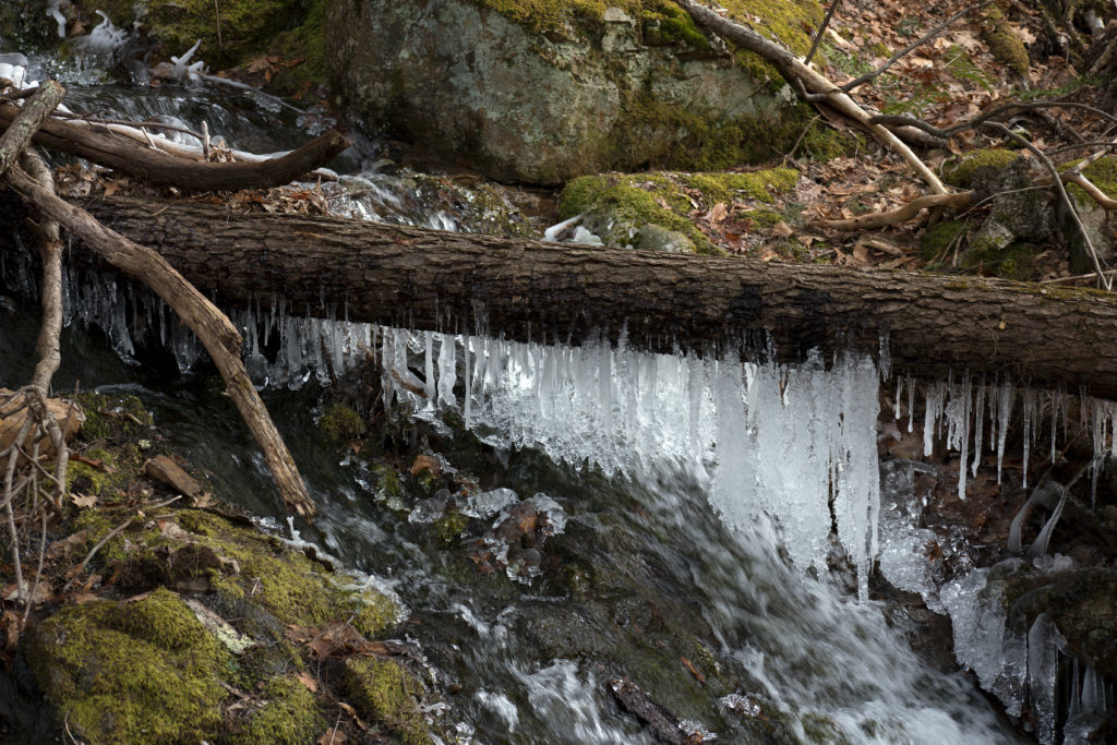 Icy Water Drips in the Woods