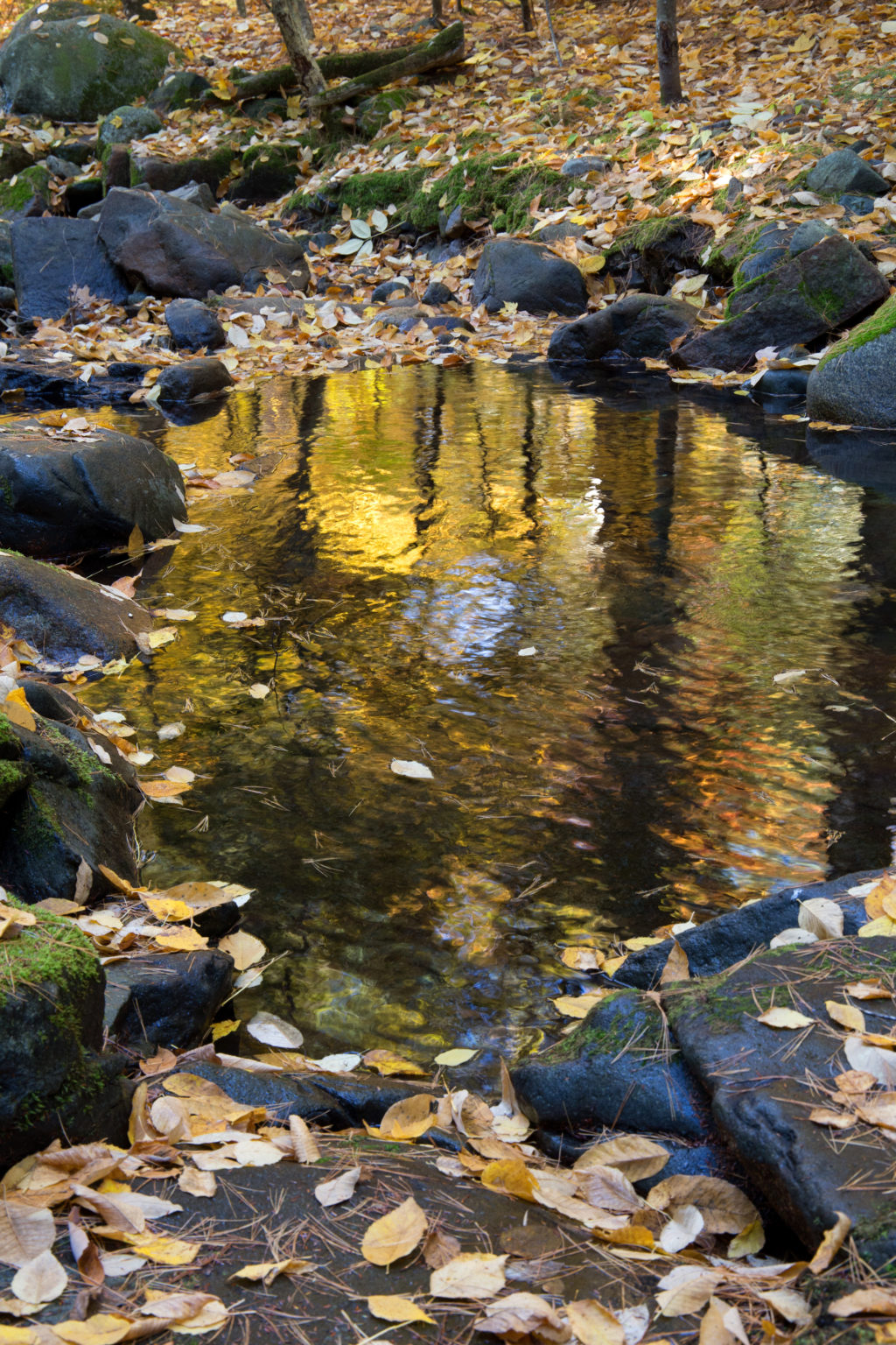 Peaceful Autumn Reflections