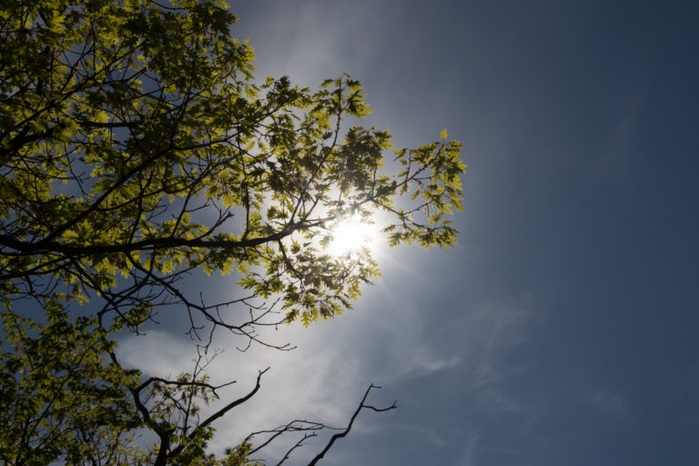 Sun Behind Tree Limb