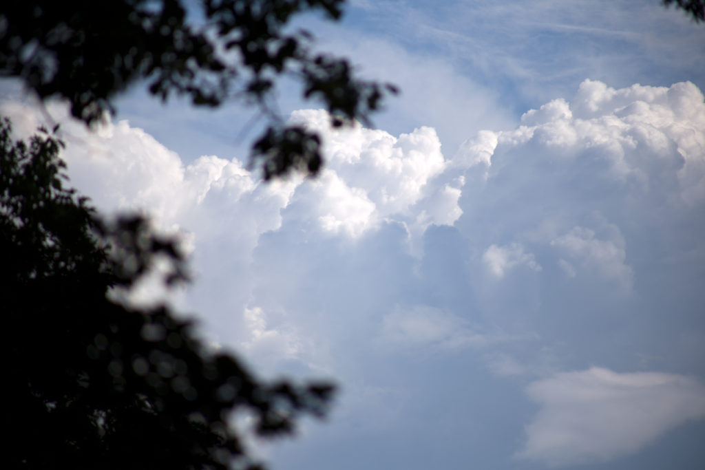 Looking Past Trees At Puffy White Clouds