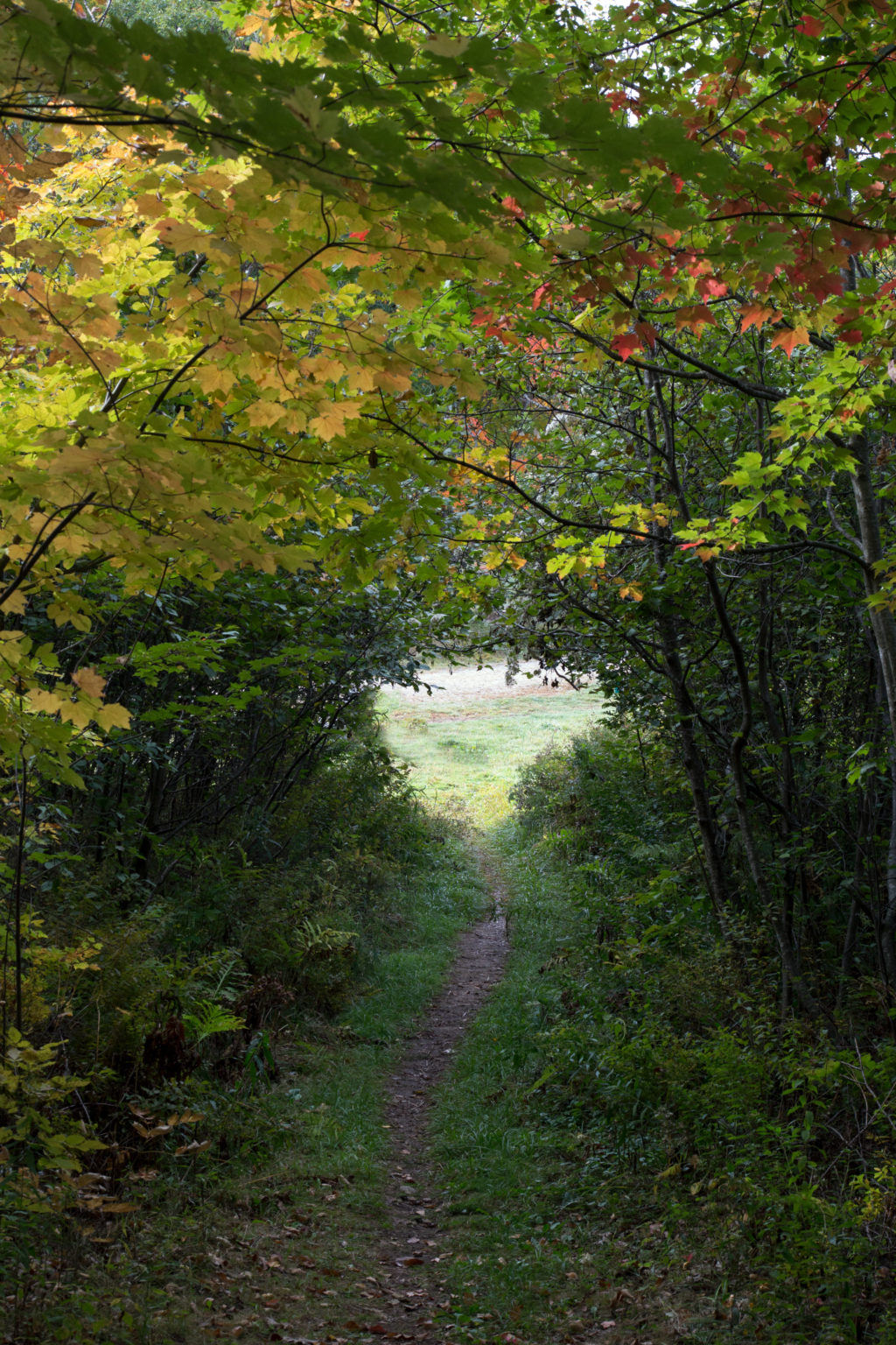 Narrow Path Through Thick Woods