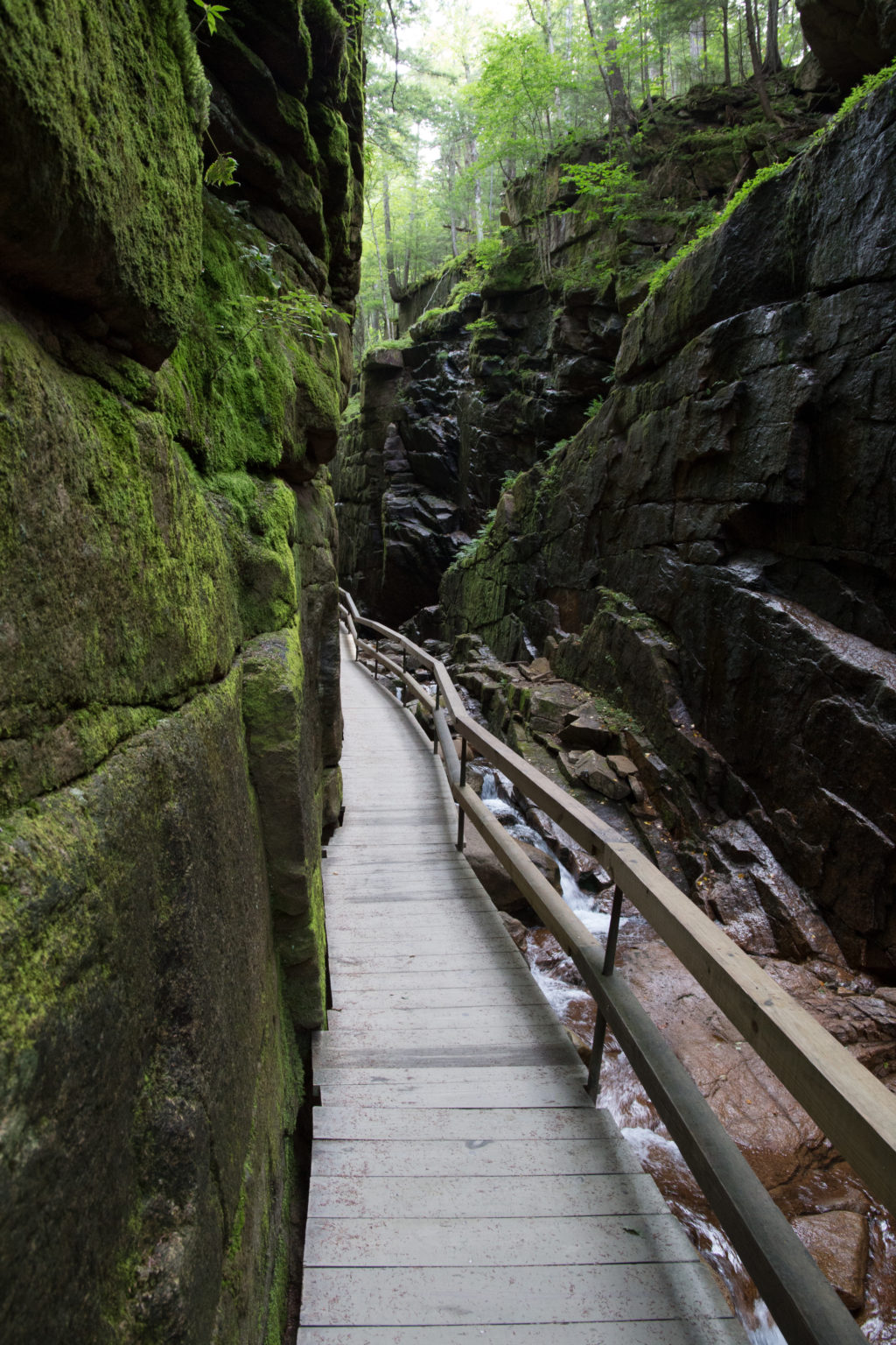 Narrow Boardwalk Along Mossy Cliff Walls