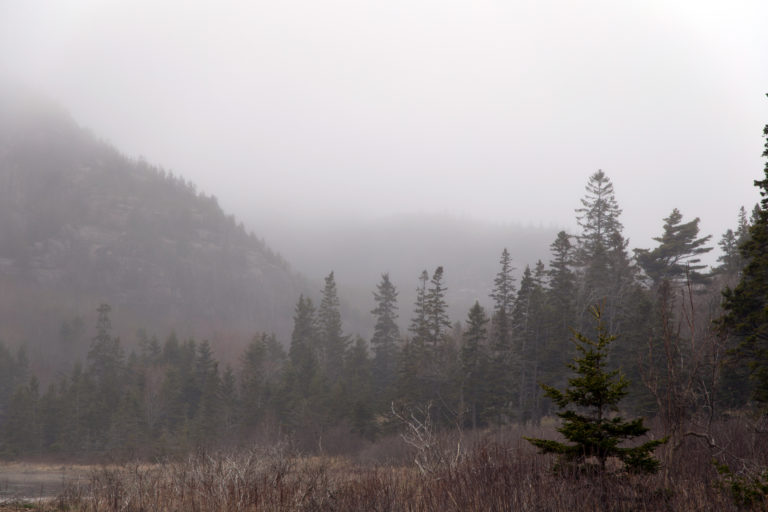 Thick Fog in the Valley