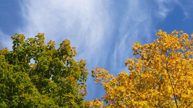 Autumn Foliage and Wispy Clouds
